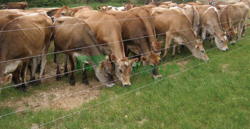 gard electric pentru animale
